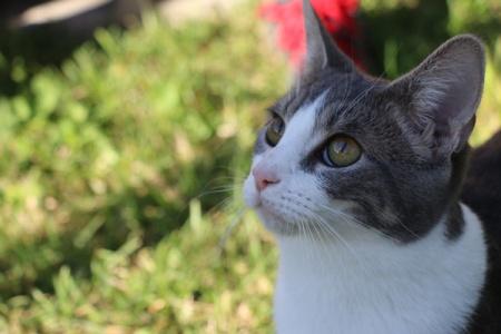 cat-1_600x400